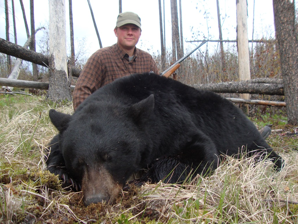 BCO Bear
