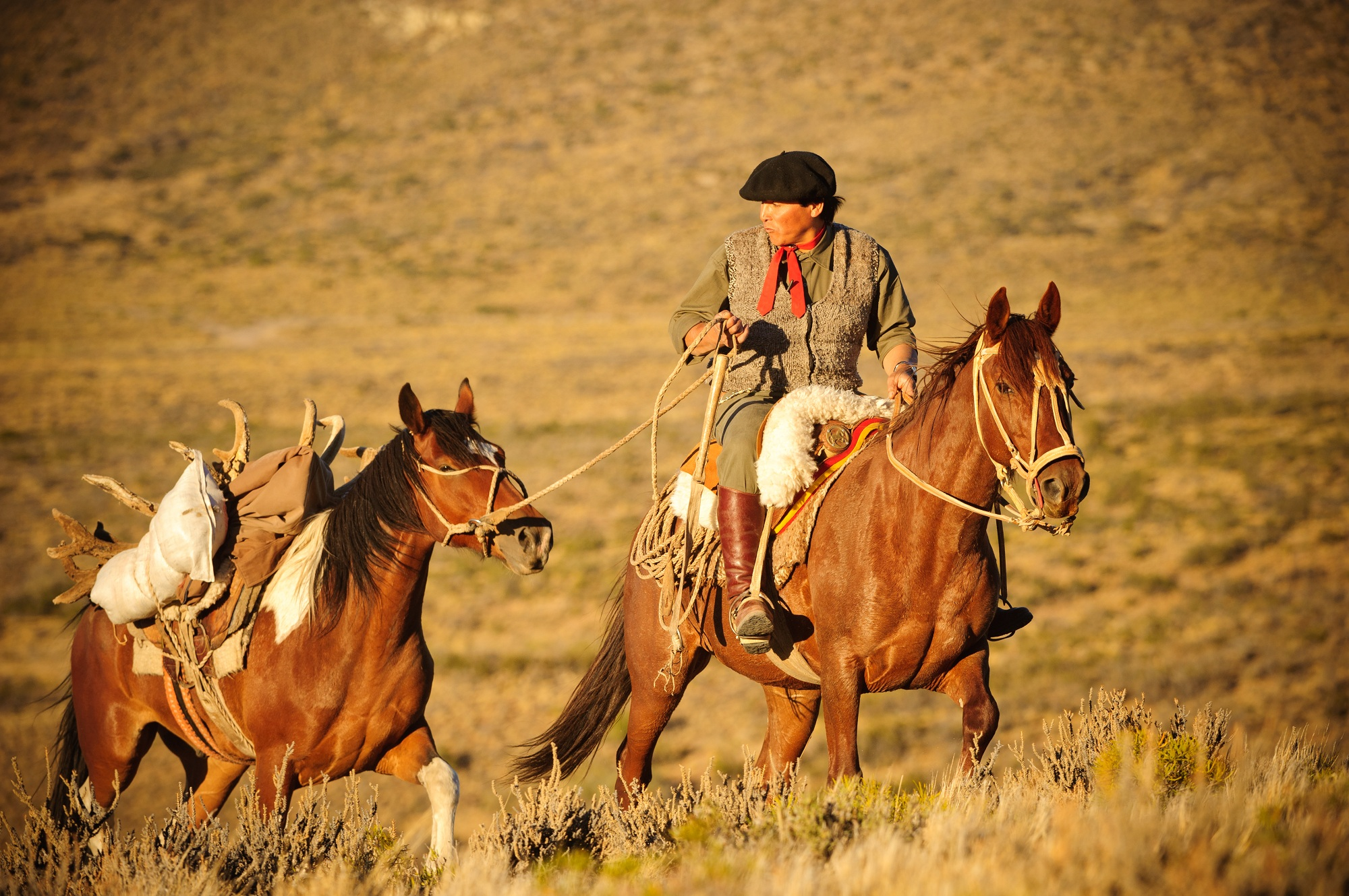 BGH Patagonia Horse