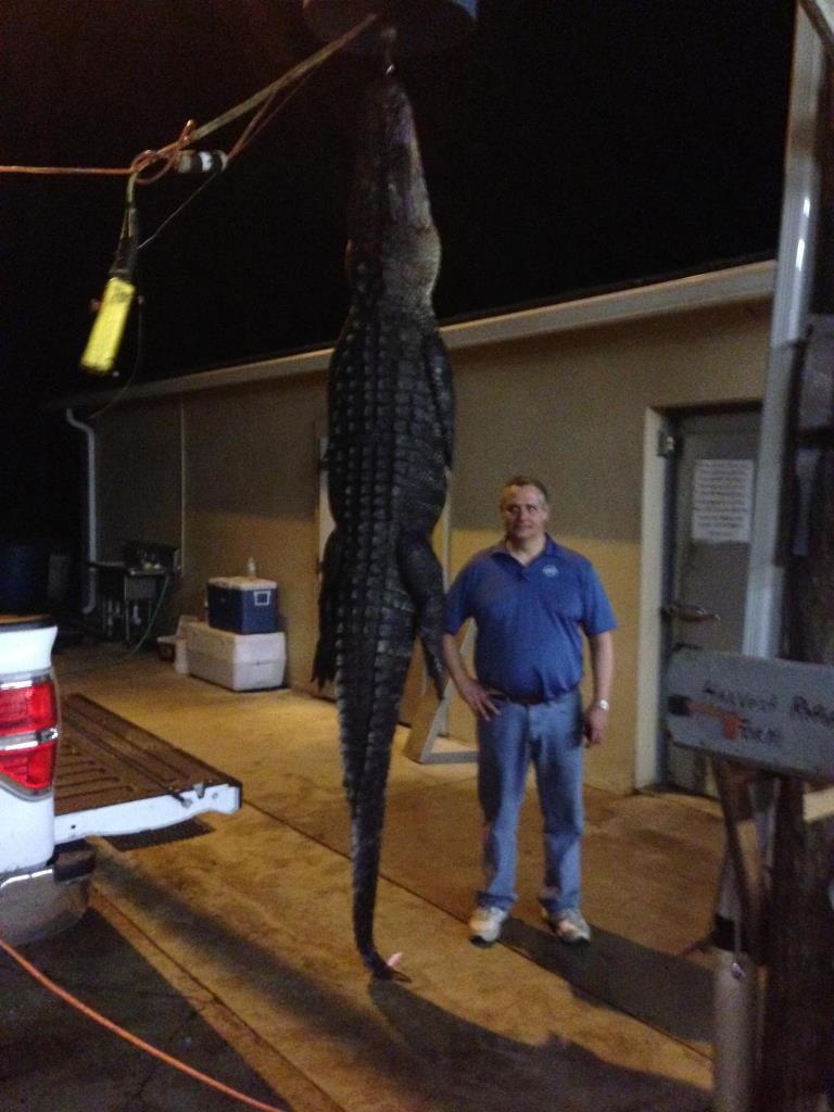 Deep South Gator 20142