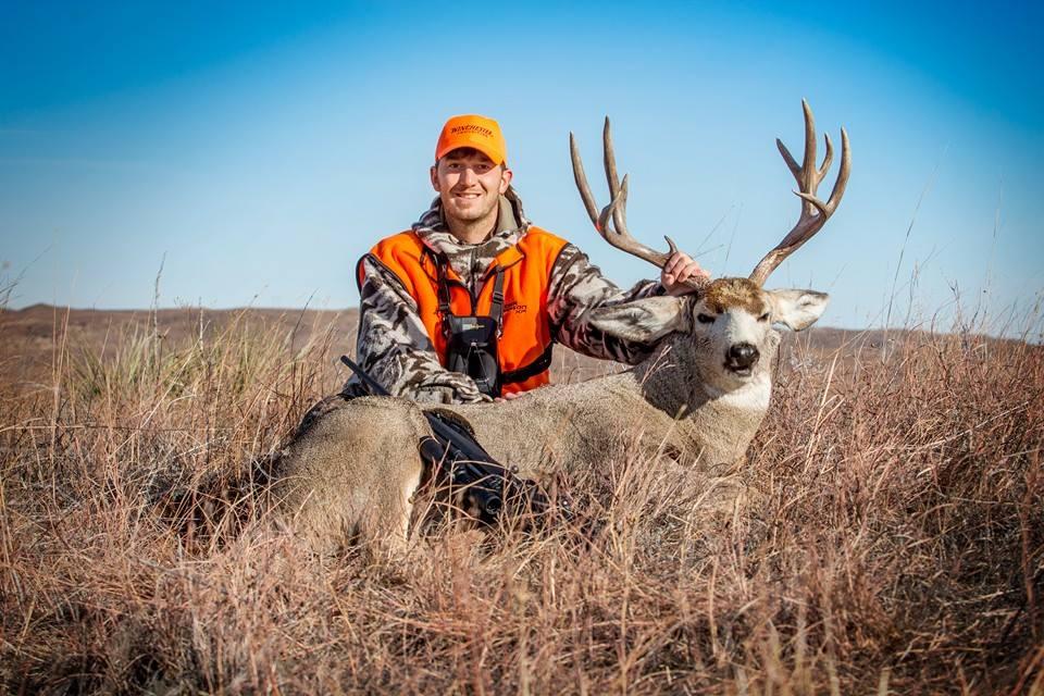 GS Mule Deer2