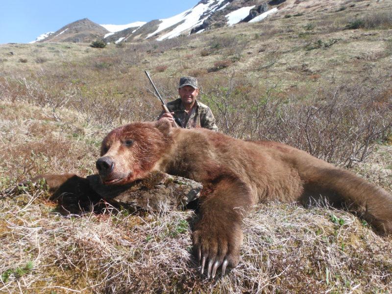 LD Brown Bear2