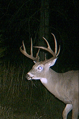 LW Whitetail2 2011