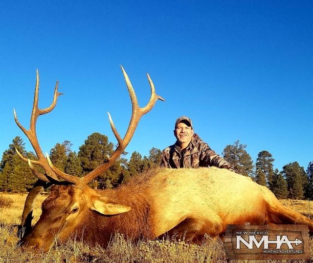 NMHA Elk