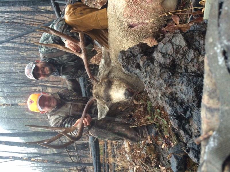 RK Cody Mule Deer