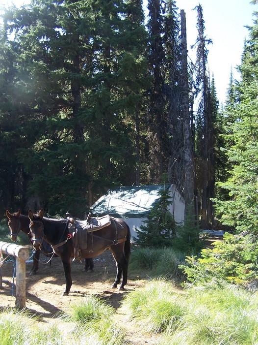 RP Camp Horse