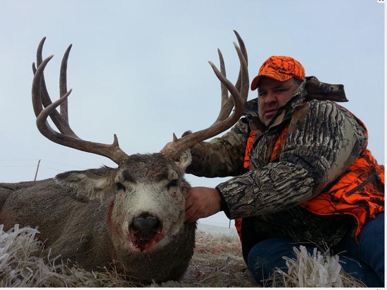 TP Mule Deer 2012