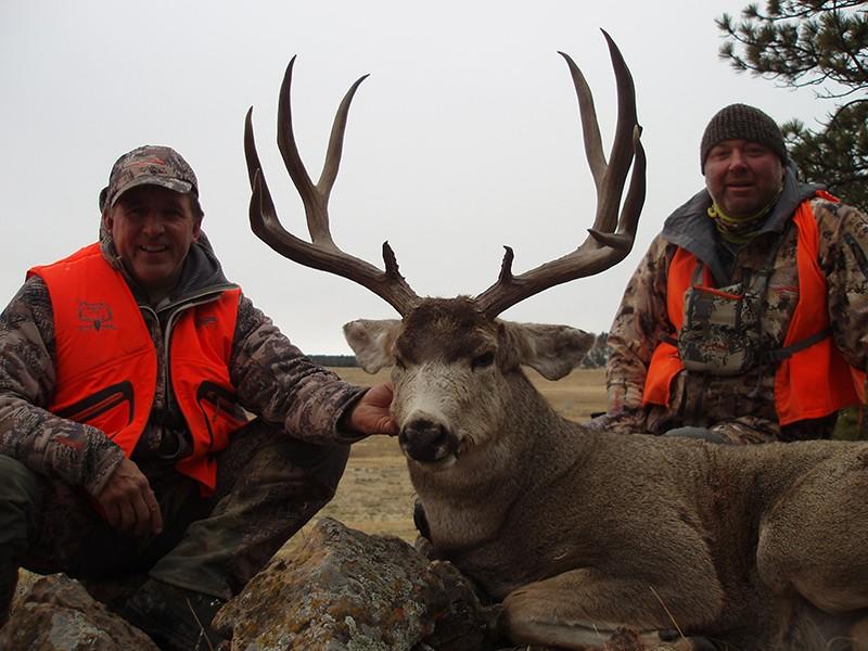 TW Deer2