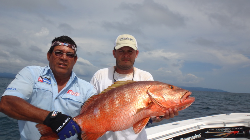 Zanacudo Red Snapper